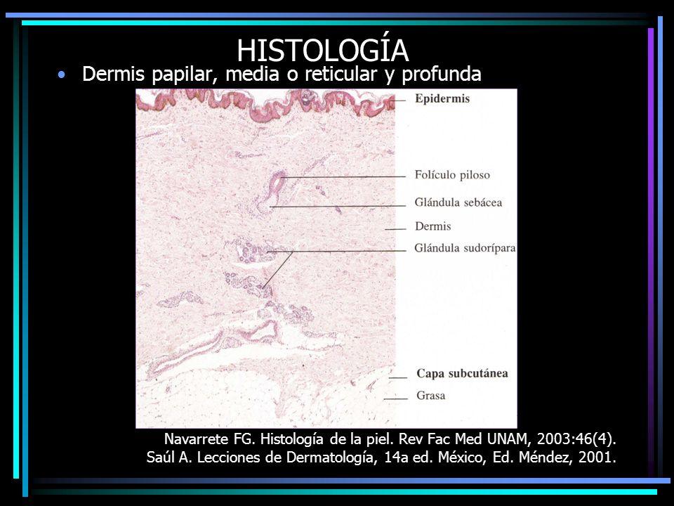 HISTOLOGÍA Dermis papilar, media o reticular y profunda