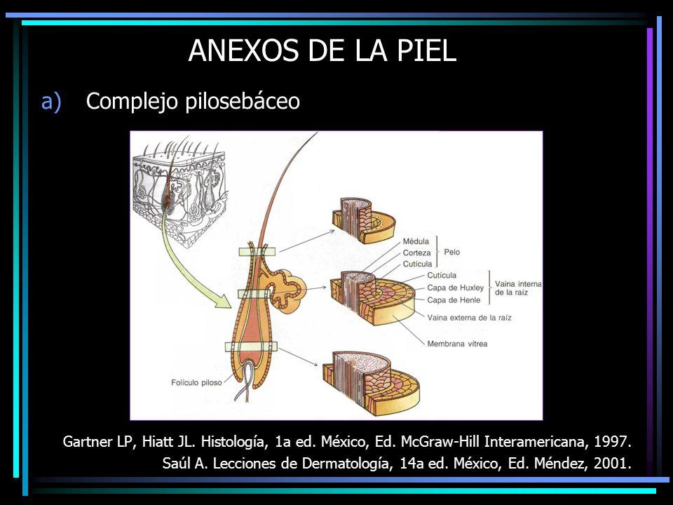 ANEXOS DE LA PIEL Complejo pilosebáceo