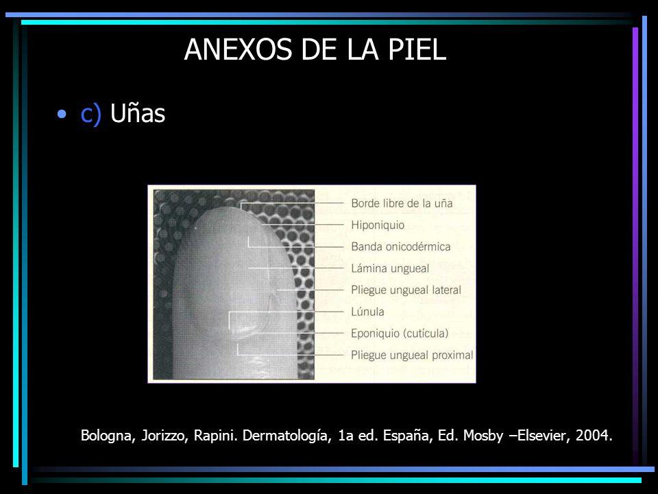 ANEXOS DE LA PIEL c) Uñas
