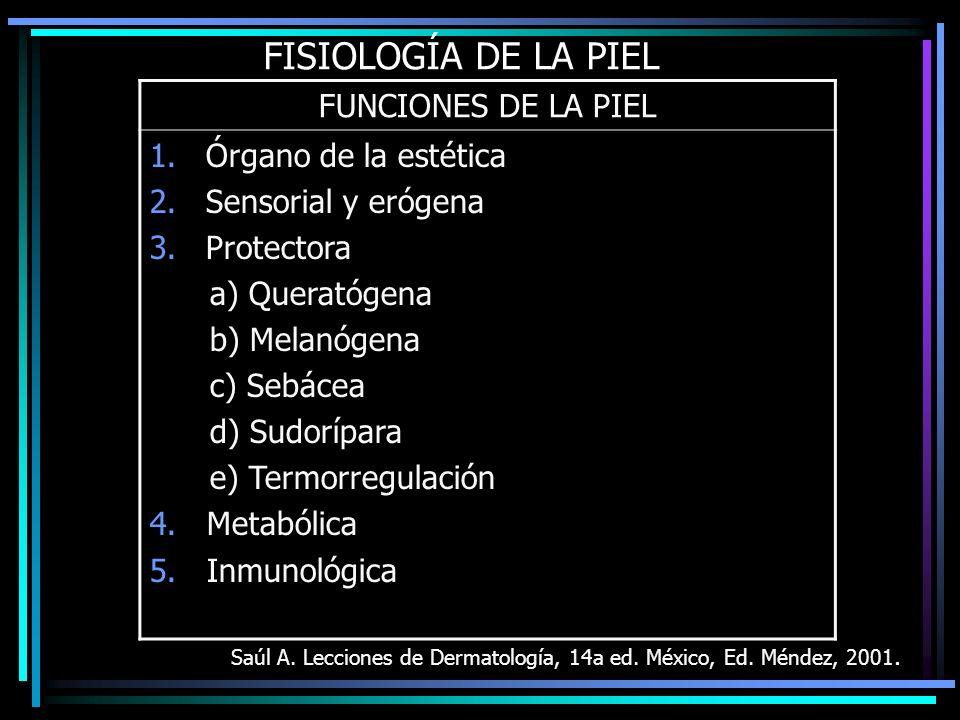 FISIOLOGÍA DE LA PIEL FUNCIONES DE LA PIEL Órgano de la estética