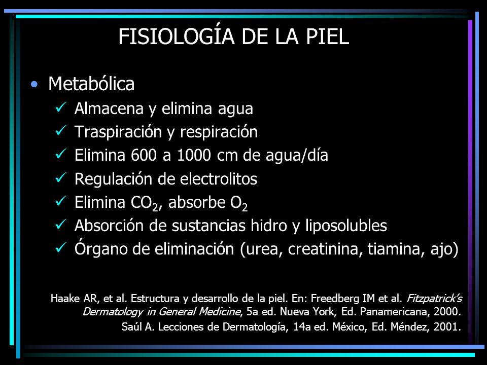FISIOLOGÍA DE LA PIEL Metabólica Almacena y elimina agua
