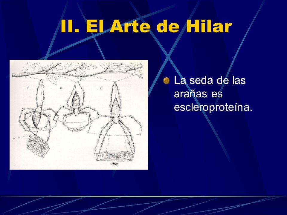 II. El Arte de Hilar La seda de las arañas es escleroproteína.