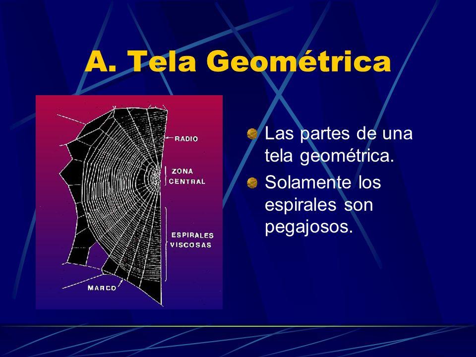 A. Tela Geométrica Las partes de una tela geométrica.