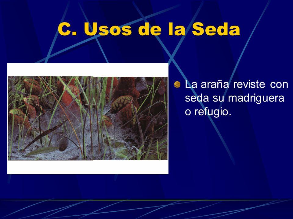 C. Usos de la Seda La araña reviste con seda su madriguera o refugio.