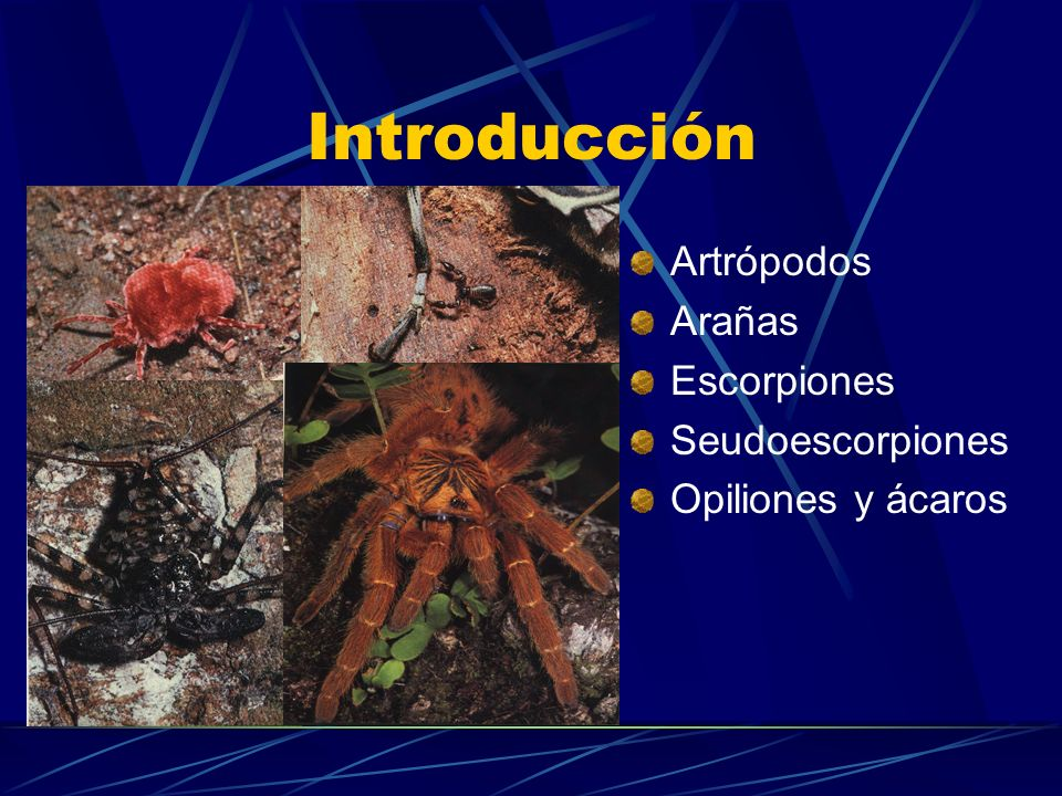 Introducción Artrópodos Arañas Escorpiones Seudoescorpiones