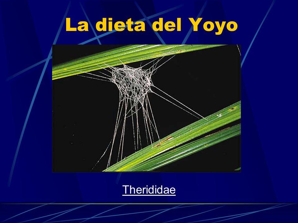 La dieta del Yoyo Therididae