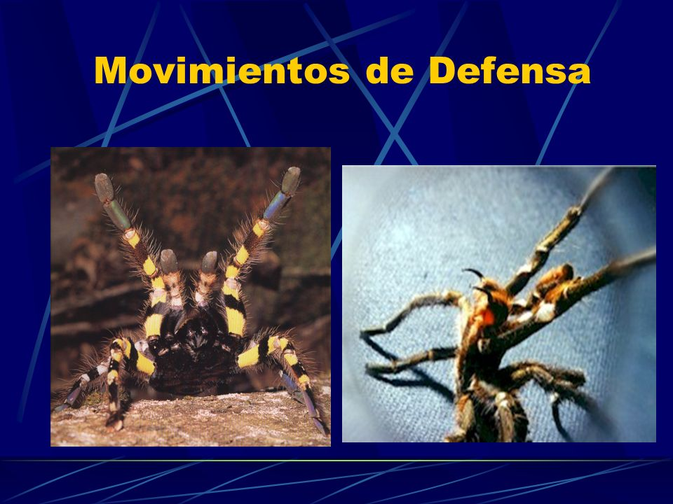 Movimientos de Defensa