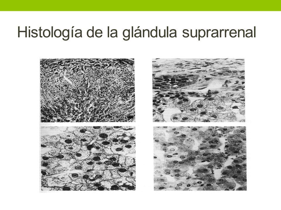 Histología de la glándula suprarrenal