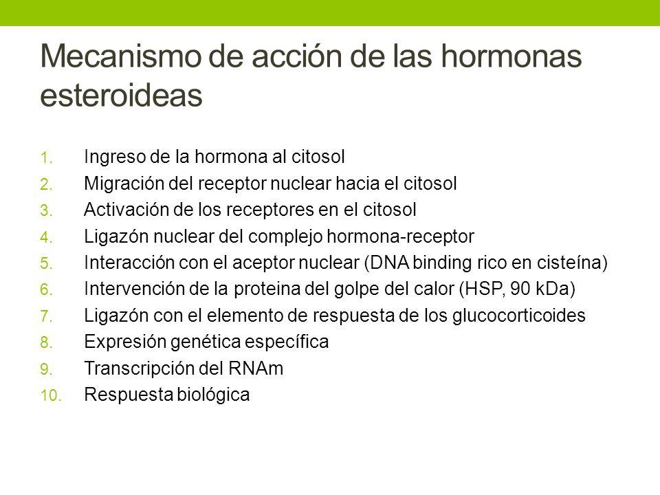 Mecanismo de acción de las hormonas esteroideas