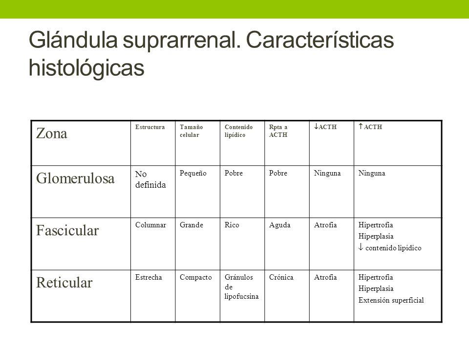 Magnífico Funciones De La Glándula Suprarrenal Patrón - Anatomía de ...