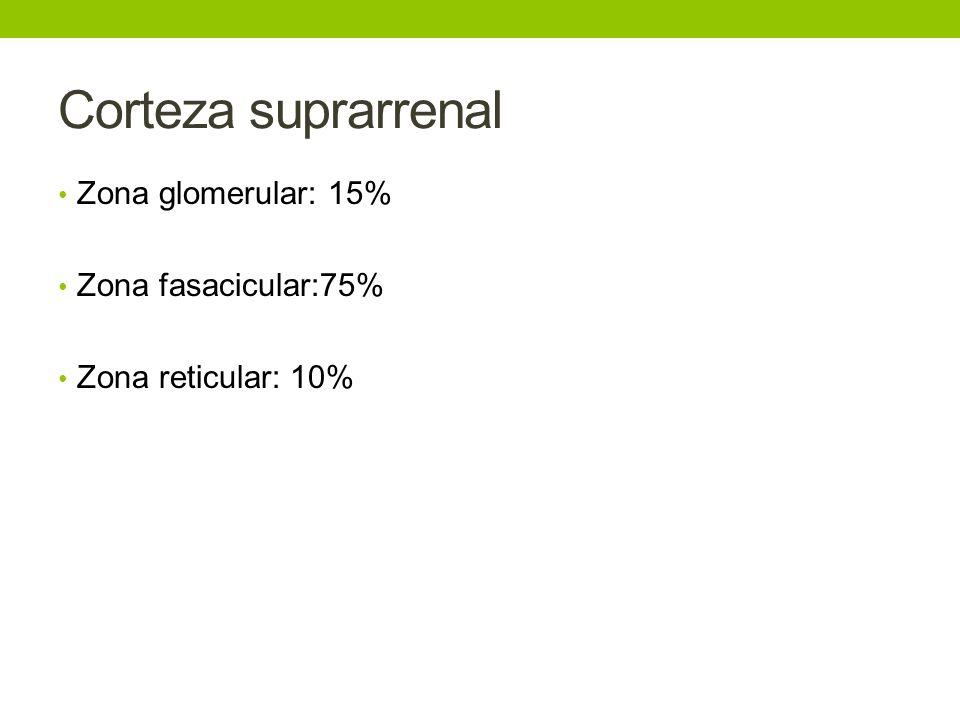 Corteza suprarrenal Zona glomerular: 15% Zona fasacicular:75%
