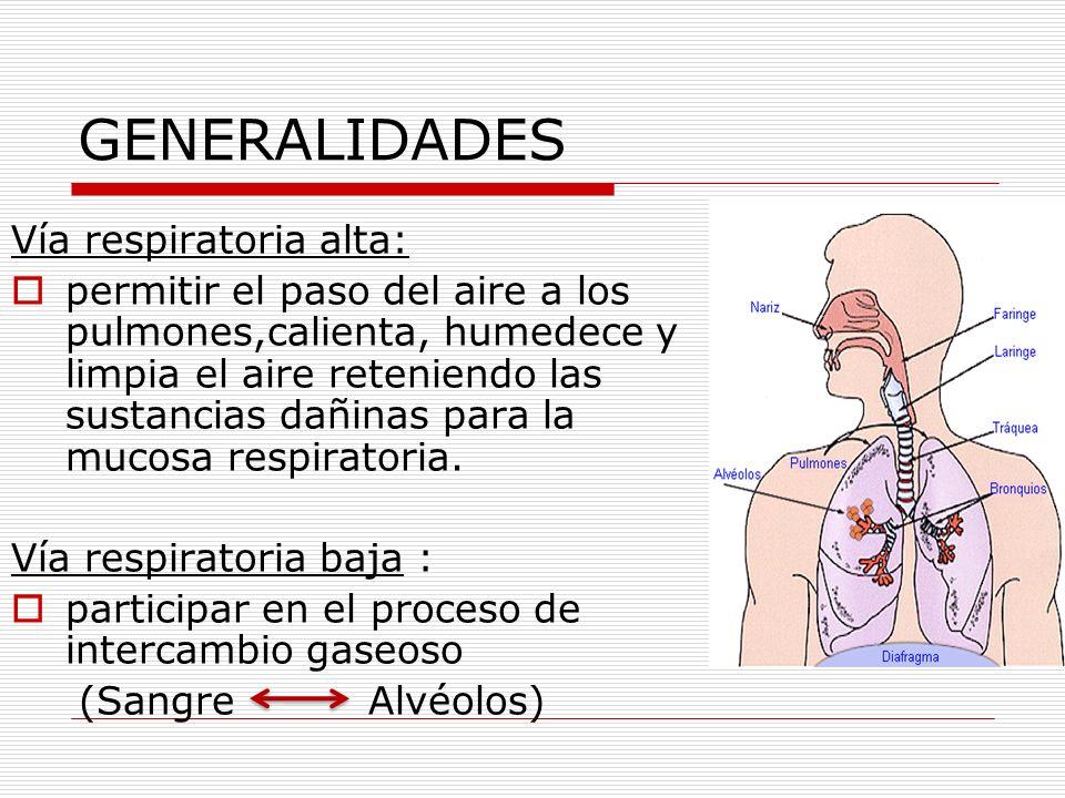 GENERALIDADES Vía respiratoria alta: