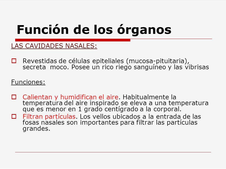 Función de los órganos LAS CAVIDADES NASALES: