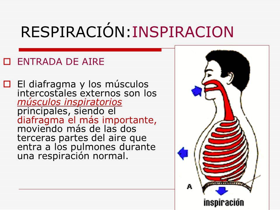RESPIRACIÓN:INSPIRACION