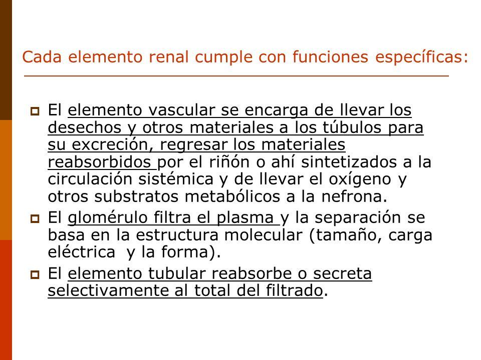 Cada elemento renal cumple con funciones específicas: