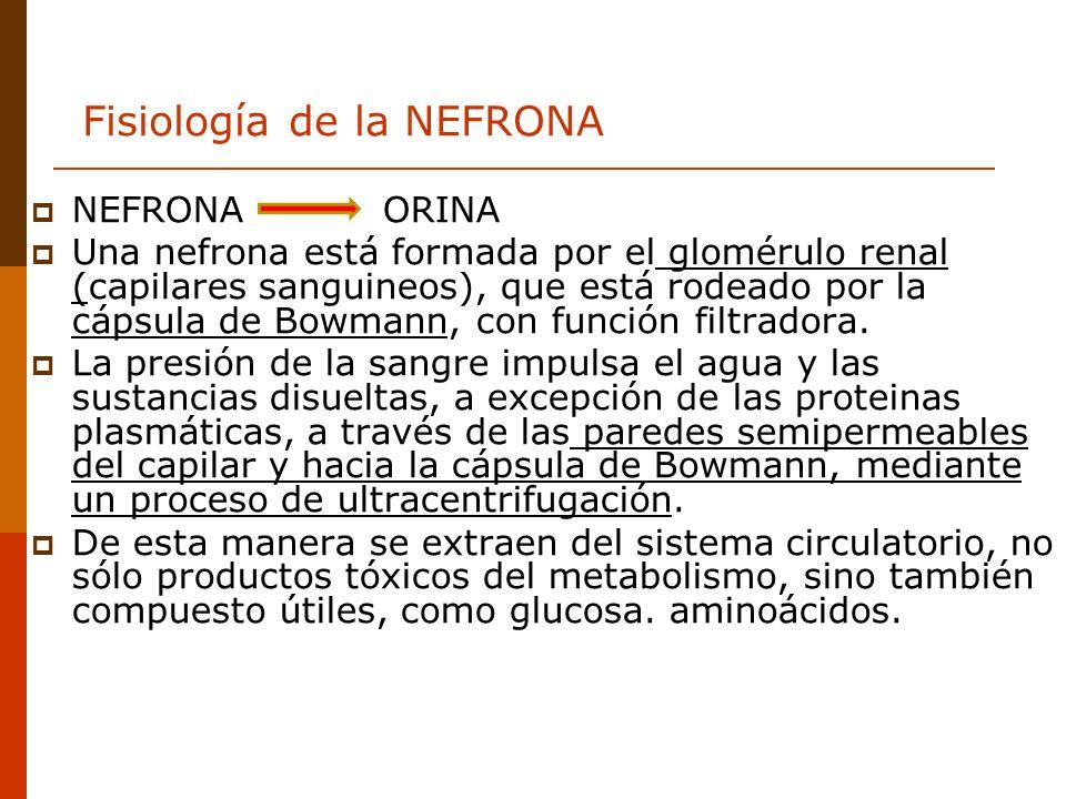 Fisiología de la NEFRONA