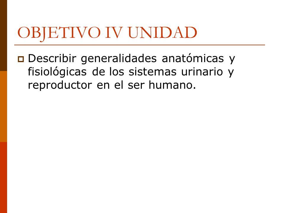 OBJETIVO IV UNIDADDescribir generalidades anatómicas y fisiológicas de los sistemas urinario y reproductor en el ser humano.
