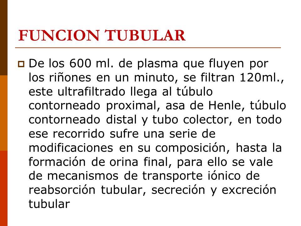FUNCION TUBULAR