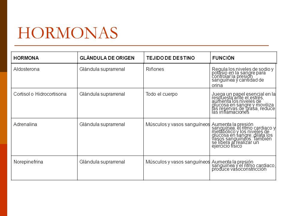 HORMONAS HORMONA GLÁNDULA DE ORIGEN TEJIDO DE DESTINO FUNCIÓN