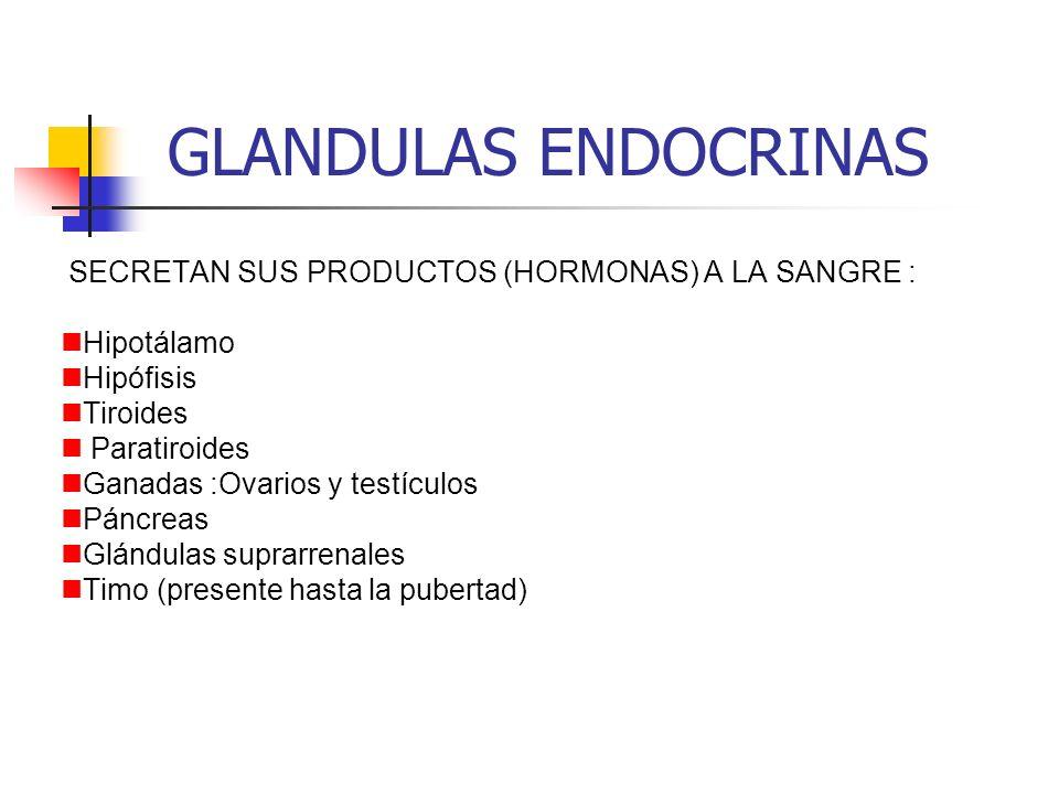 GLANDULAS ENDOCRINAS SECRETAN SUS PRODUCTOS (HORMONAS) A LA SANGRE :