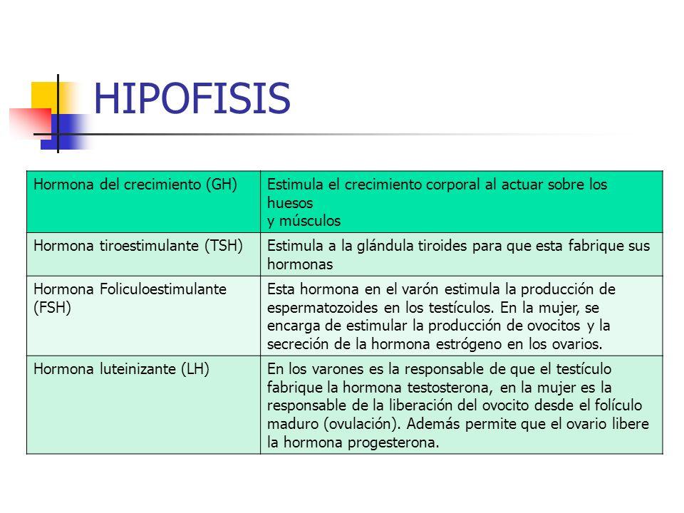HIPOFISIS Hormona del crecimiento (GH)