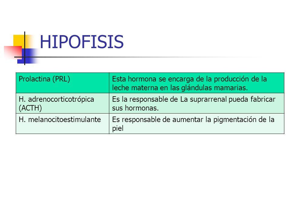 HIPOFISIS Prolactina (PRL)