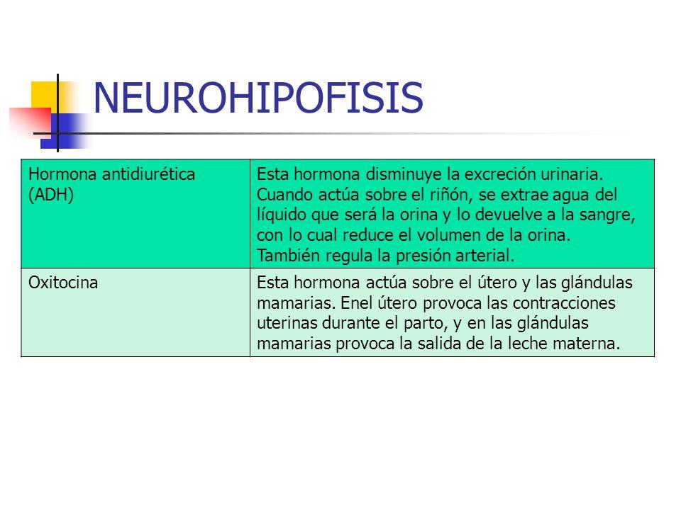 NEUROHIPOFISIS Hormona antidiurética (ADH)