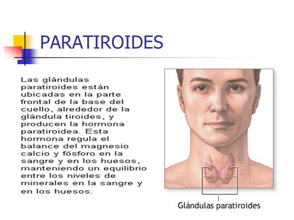 PARATIROIDES