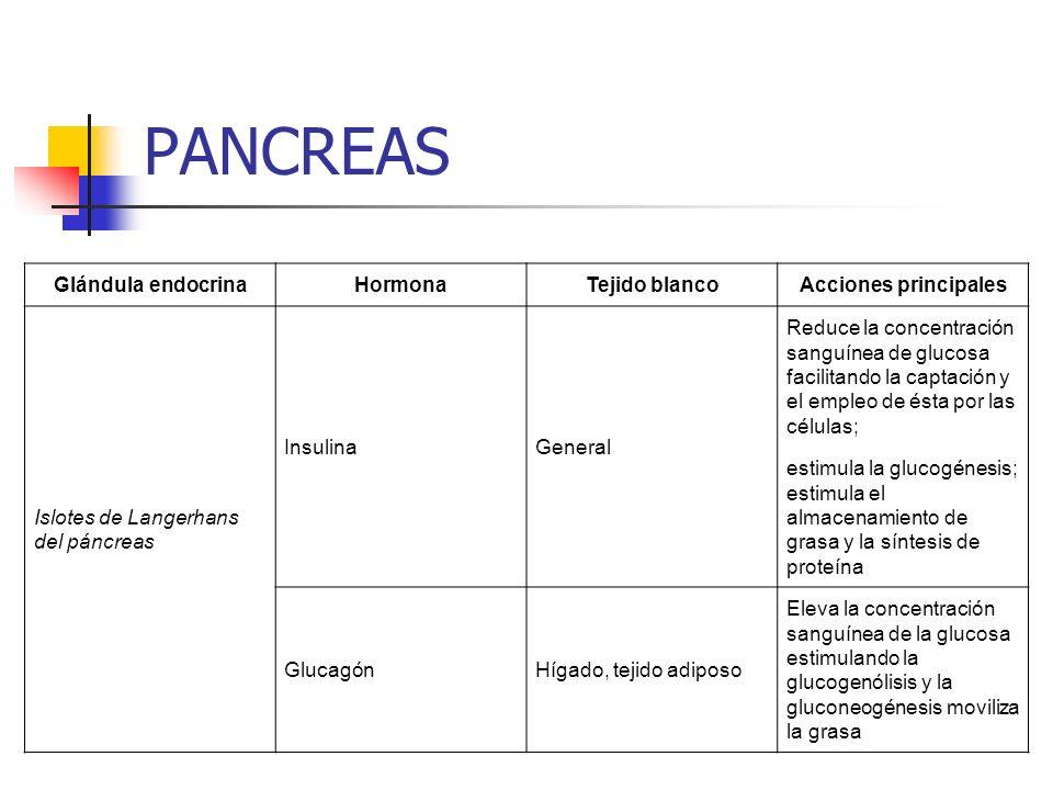 PANCREAS Glándula endocrina Hormona Tejido blanco Acciones principales