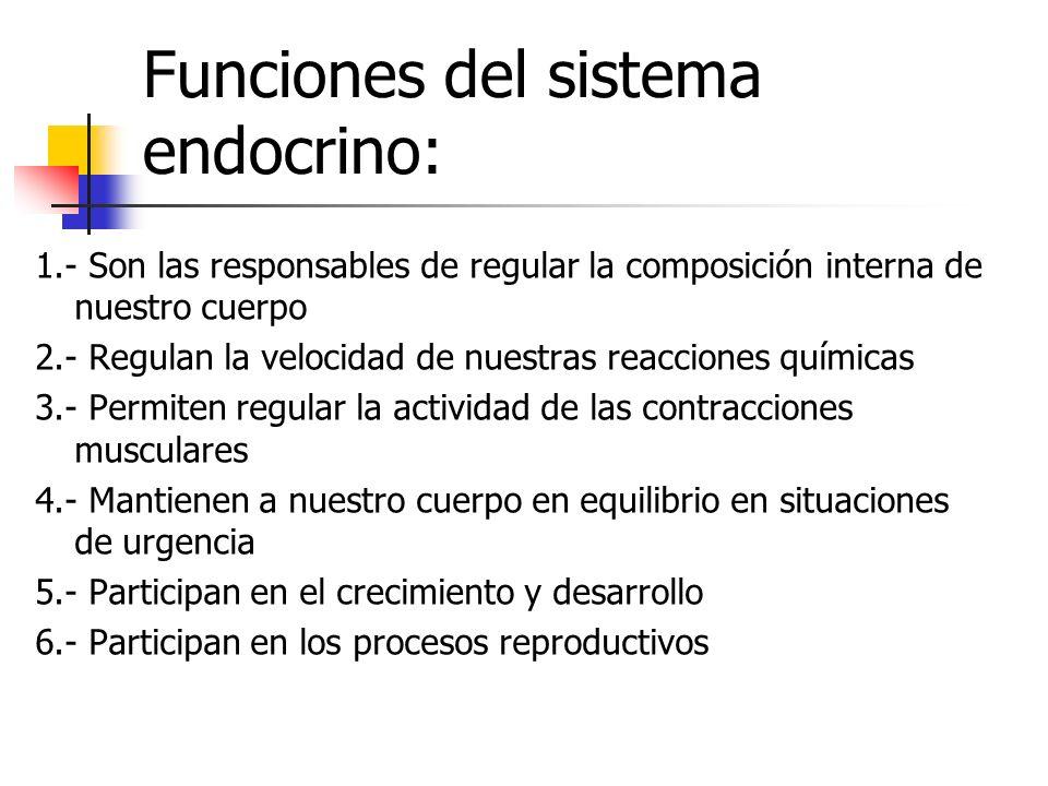 Funciones del sistema endocrino: