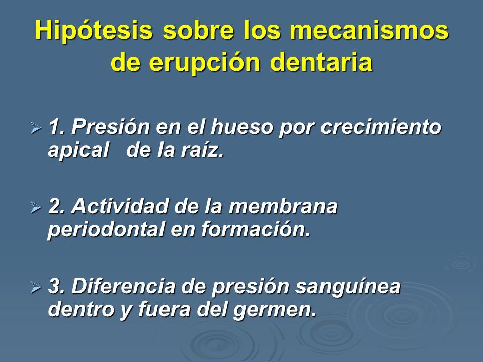 Hipótesis sobre los mecanismos de erupción dentaria