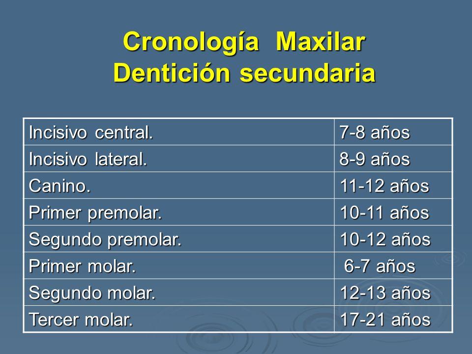 Cronología Maxilar Dentición secundaria