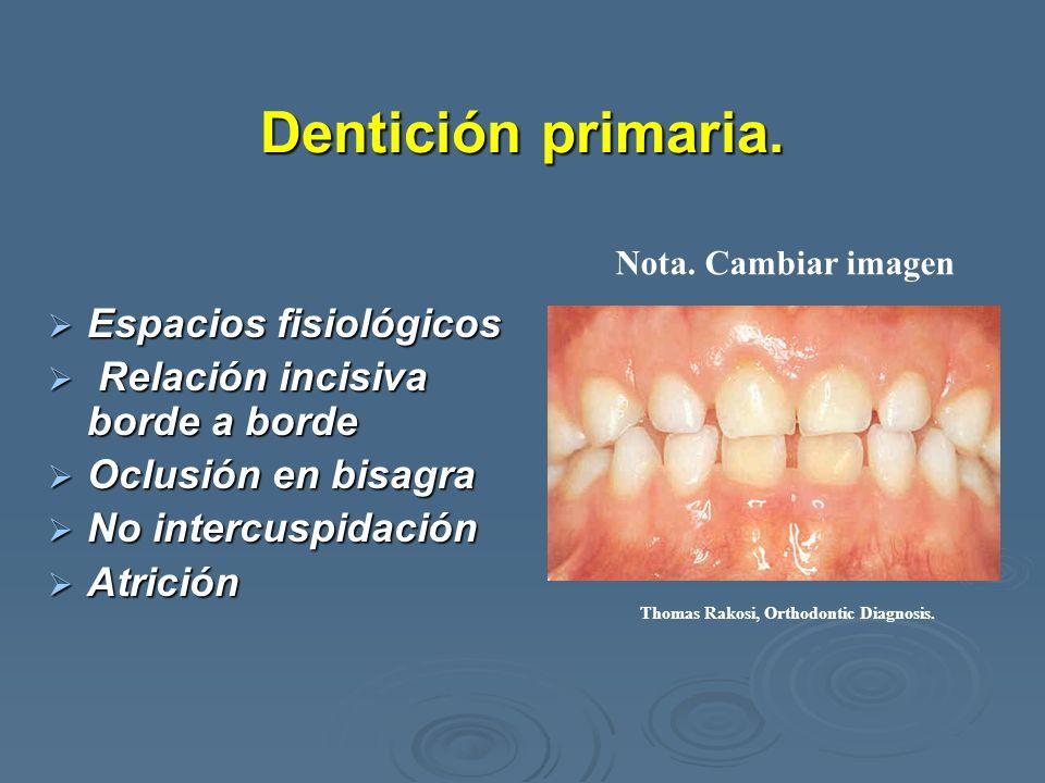 Dentición primaria. Espacios fisiológicos