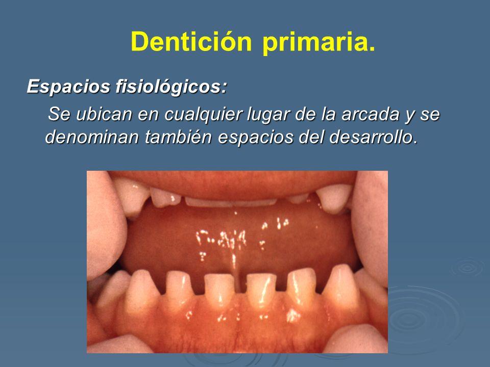 Dentición primaria. Espacios fisiológicos: