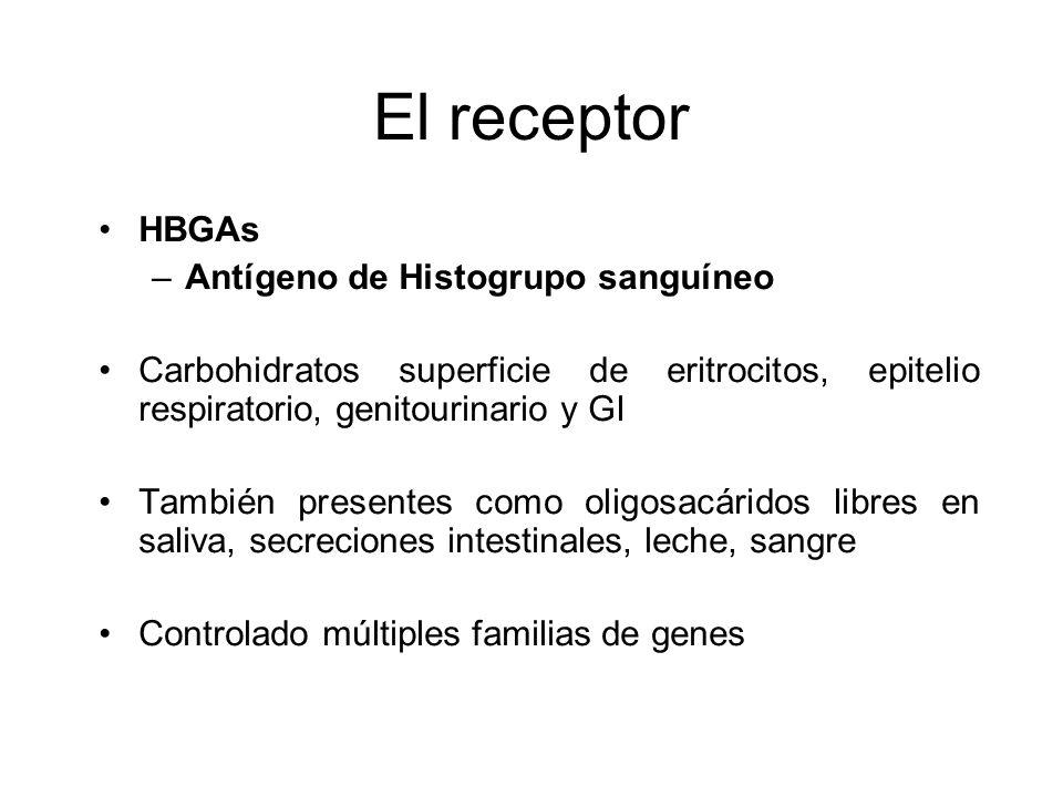 El receptor HBGAs Antígeno de Histogrupo sanguíneo