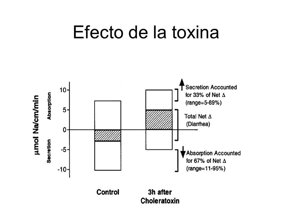 Efecto de la toxina