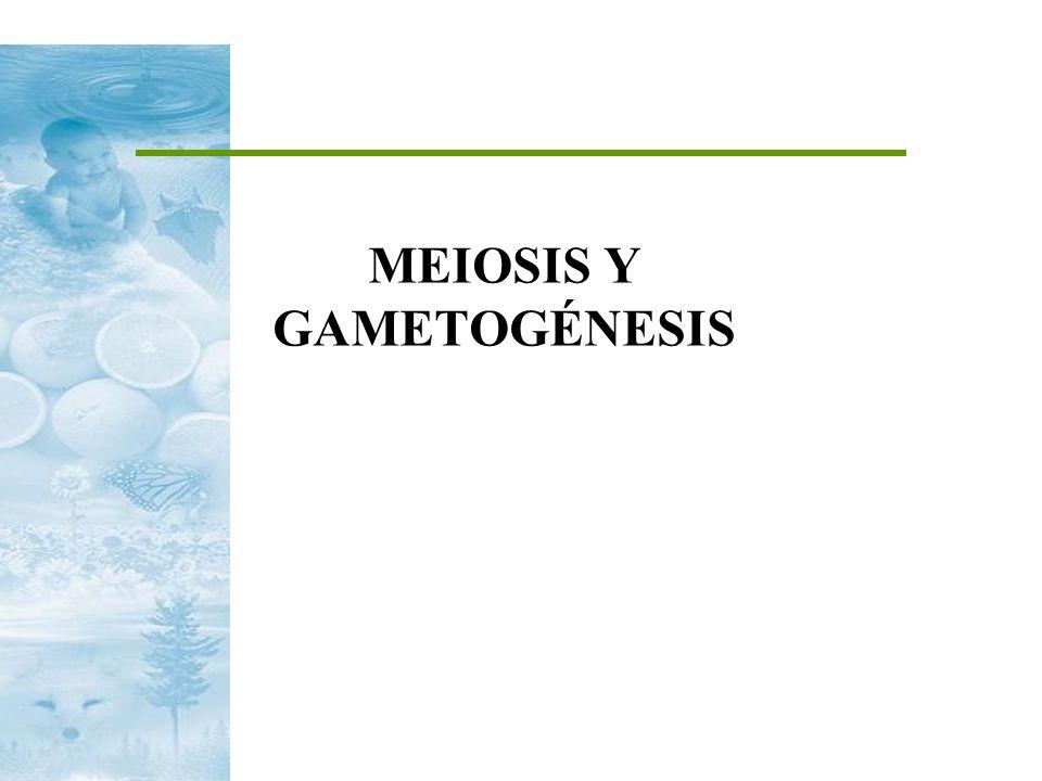 MEIOSIS Y GAMETOGÉNESIS