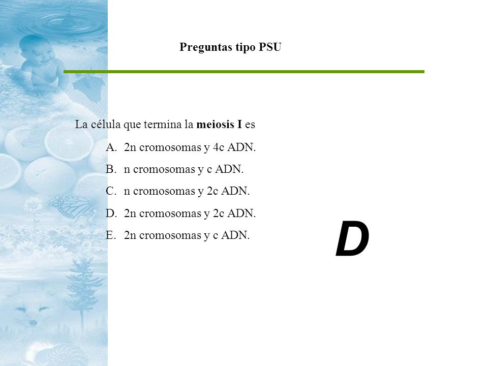 D Preguntas tipo PSU La célula que termina la meiosis I es