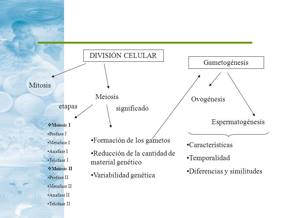 Formación de los gametos Reducción de la cantidad de material genético