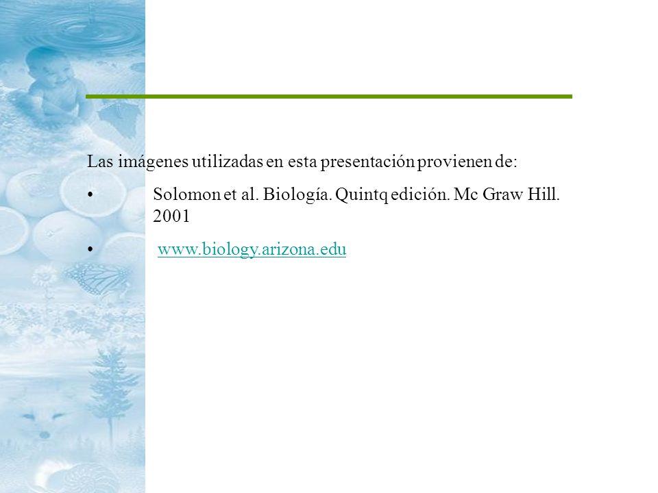 Las imágenes utilizadas en esta presentación provienen de: