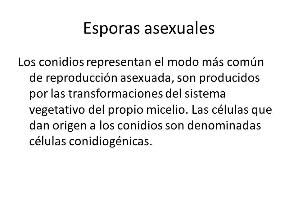 Esporas asexuales