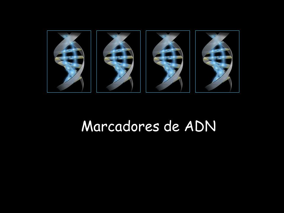 Marcadores de ADN