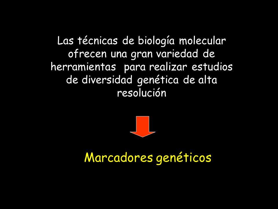 Las técnicas de biología molecular ofrecen una gran variedad de herramientas para realizar estudios de diversidad genética de alta resolución