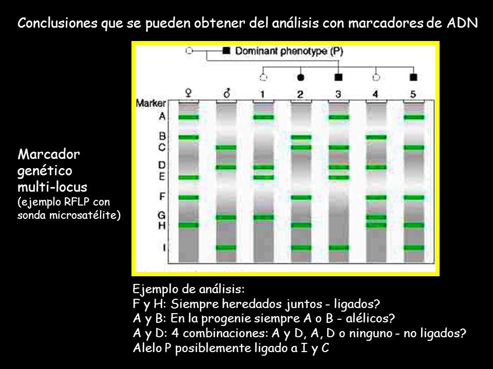 Conclusiones que se pueden obtener del análisis con marcadores de ADN