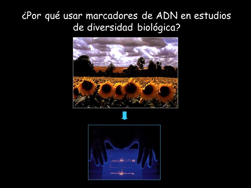 ¿Por qué usar marcadores de ADN en estudios de diversidad biológica