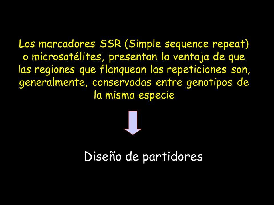 Los marcadores SSR (Simple sequence repeat) o microsatélites, presentan la ventaja de que las regiones que flanquean las repeticiones son, generalmente, conservadas entre genotipos de la misma especie
