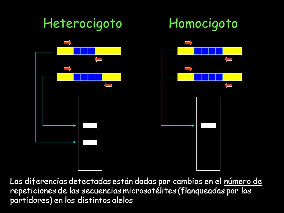 Heterocigoto Homocigoto