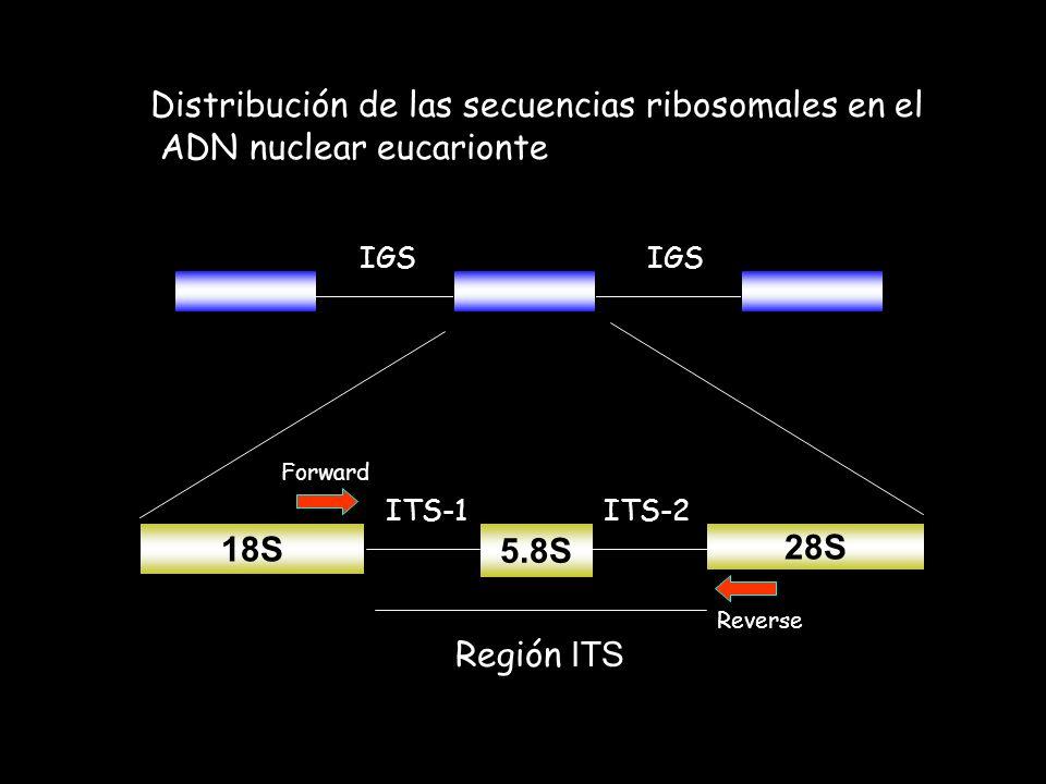 Distribución de las secuencias ribosomales en el