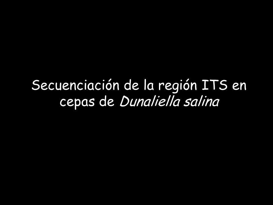 Secuenciación de la región ITS en cepas de Dunaliella salina