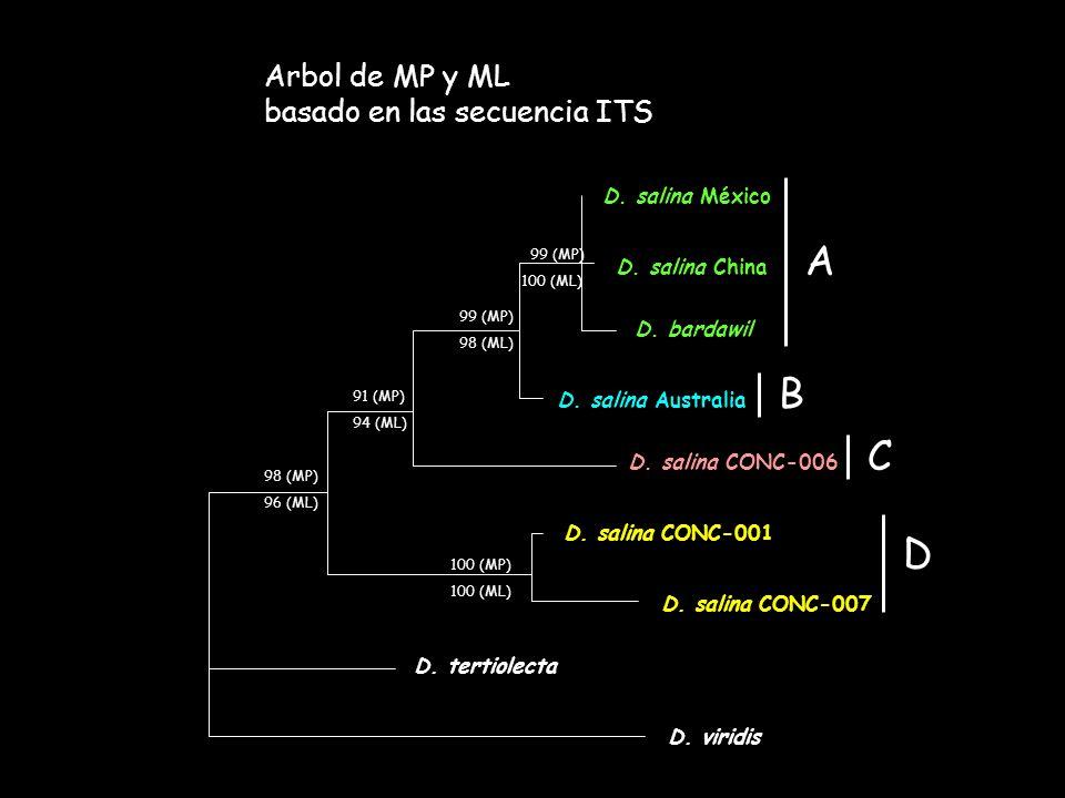 A B C D Arbol de MP y ML basado en las secuencia ITS D. salina México